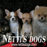 Nettisdogs